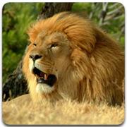lion_logo_3