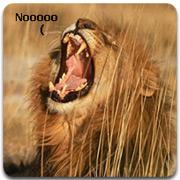 lion_no_logo