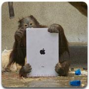 ipad_monkey_logo